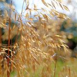 Grasses - backlight