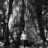 Small boy big tree