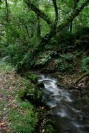 A Stream through Mill Wood
