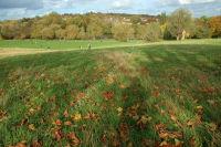 Hamsptead Heath