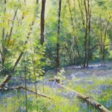 Bluebells in Paddock Wood