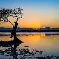 Golden Beach Mangrove