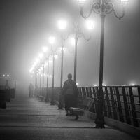 The Fog, Camargue, France