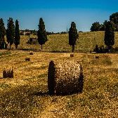 Tuscan Hay Bale