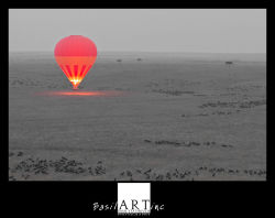 One balloon, thousands of wildebeest