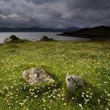 Meadow Stones