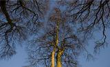 Sky Trees
