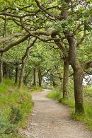 Twisted oak way