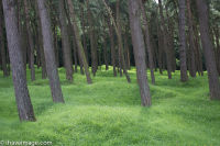 Forest at Vimy Ridge