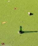Bottle in the algae