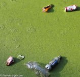 Cans and bottles in the algae