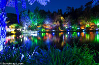 Light Show at Lake in Pukekura Park
