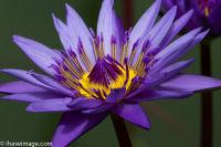 Flower in Botanical Garden Wellington
