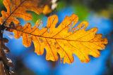 Autumn colors II
