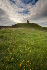 Dunstanburgh castle buttercups