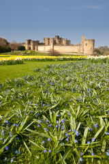 Spring flowers at Alnwick Castle