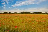 Warkworth Poppies
