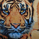 """Tiger Electra II"""