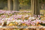 Carpet of winter flowers