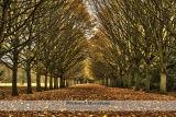 Tree Lined Autumn Avenue