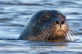 Wild Seal 2
