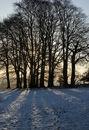 Copse and Sun, Hergest Ridge