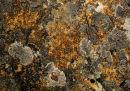 Lichen, Granite, Rockpool, Lichen I