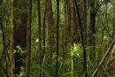 Maits Forest II