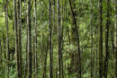 Maits Forest I