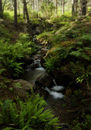 Stream in Forest, Cambus O'May