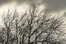 Winter, Bird Hide Hill