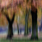 Group of Trees in Motion