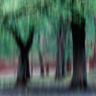 Group of Trees in Motion - green