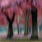 Group of Trees in Motion - red