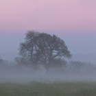 Misty Morning (1), Cheshire