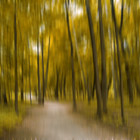 Forrest in Motion, Moscow (yellow)