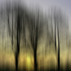 Three Trees in Motion - yellow