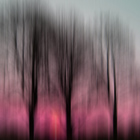 Three Trees in Motion - pink