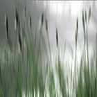 Reeds Abstract - green