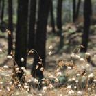 Fluffy Grass #2