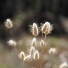 Fluffy Grass #1