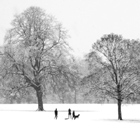 Silhouettes in the Snow
