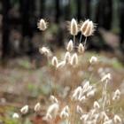 Fluffy Grass #5
