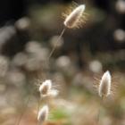 Fluffy Grass #3