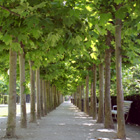 Avenue of Trees, Brussels