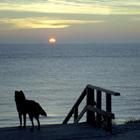 Westenschouwen Beach, Netherlands