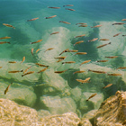 Little Fish in green Sea