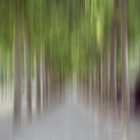 Avenue of Trees in Motion, Brussels