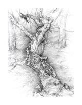Fallen beech trunk