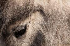 Pony's Eye